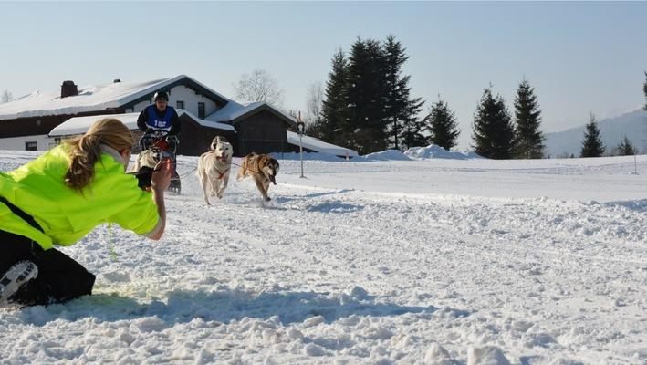 Tour bavaria alps inzell, dog sledding