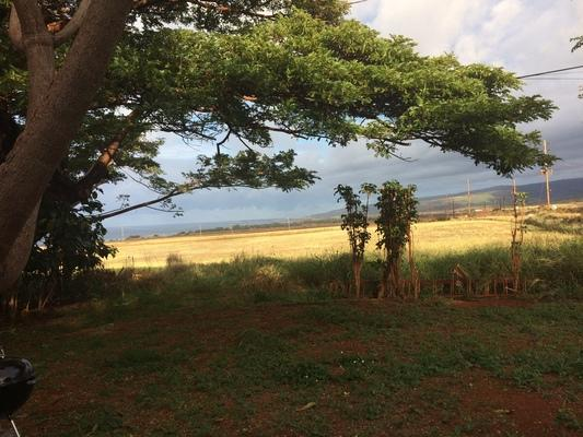 dreamlike garden ❤️ Looking West from Kaumakani toward the town of Waimea... under the Monkey Pod tree and across fields of corn... ocean, clouds and hills in the distance...
