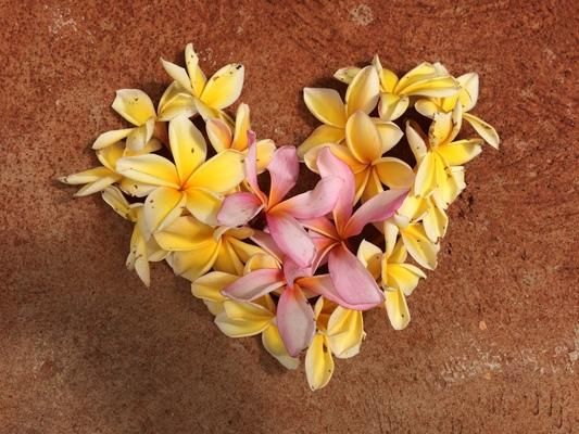 Plumeria come in different colors... here in a wonderful smelling heart ❤❤❤ shape...