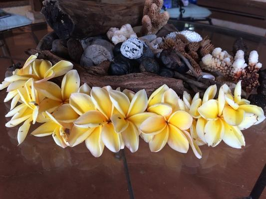 kamaha o'melia , plumeria ... also known in some parts of the world as Frangapani... a beautiful and VERY fragrant blossom. A favorite for leis...