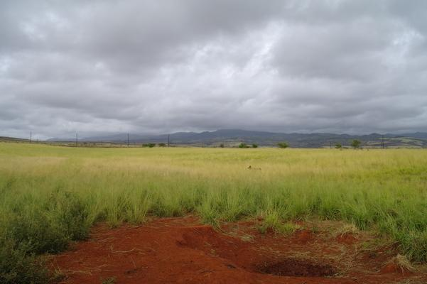 Lush pasture land... red soil... gray skies and mountains make for a beautiful landscape...