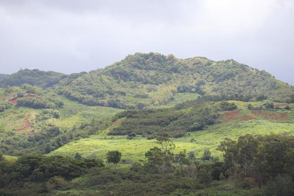 Hawaii Kauai beautyful green landscape